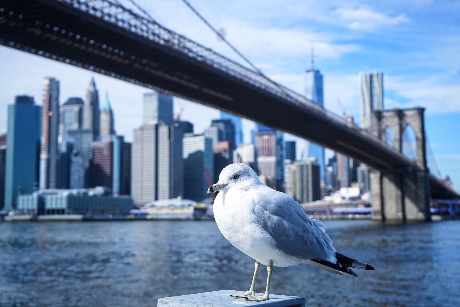 Skyline of New York City from the Brooklyn Bridge.